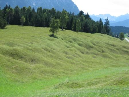 buckelwiesen.jpg