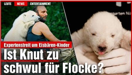 knut_flocke.jpg